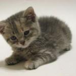 Yang Perlu Diketahui Pemelihara Kucing