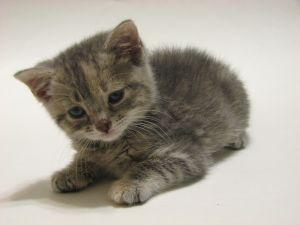 kitten_6
