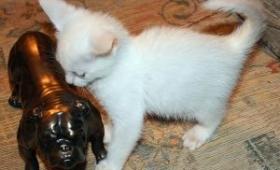 Kenali Bahaya untuk Kucing Anda
