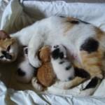 Manfaat Memandulkan Kucing Anda