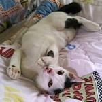 Mengapa Anak Kucing Gemar Bermain?