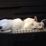 Kucing Bernama Bola