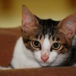 Fungsi Kaki dan Kuku Kucing