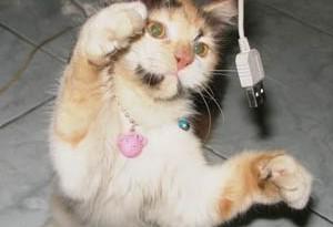 Choco kucing Hani