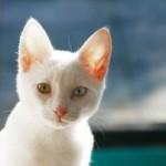 Seekor Kucing di Depan Restoran A&W part. 2
