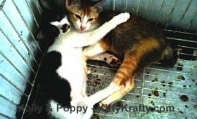 Molly & Poppy : Setia Menanti di Depan Pintu Rumah