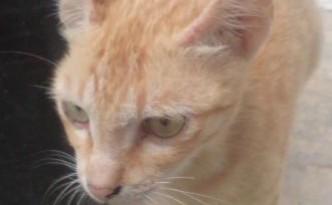 miki kucingnya ichsan