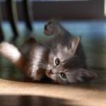 Perilaku Kucing Yang Unik