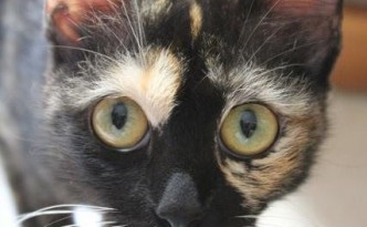 kati peri kucing ika