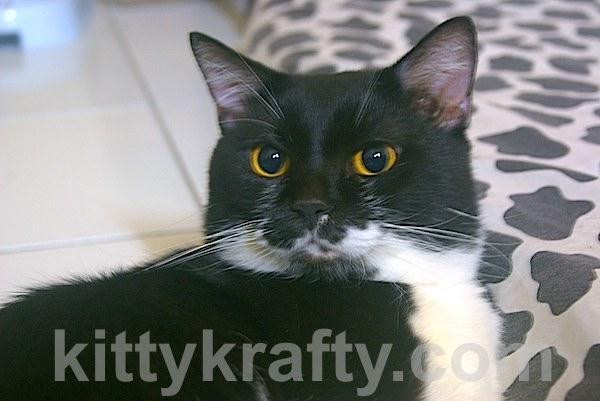 Tom - Kucing Karina