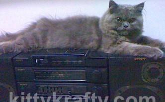 chikko-kucing-yeti