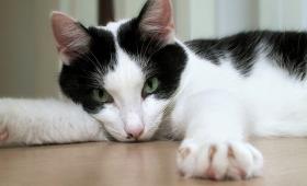 Melatih Kucing Mencakar Pada Tempatnya