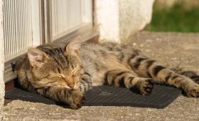 Awas Kutu Anjing atau Kucing