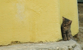 Program Sterilisasi Gratis Untuk Kucing Lokal