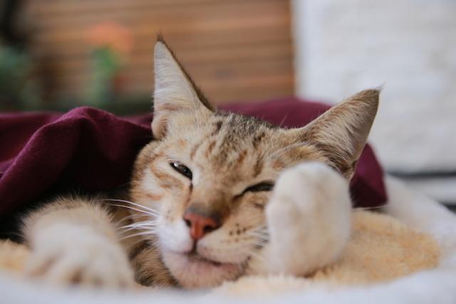 tanda tanda kucing sakit