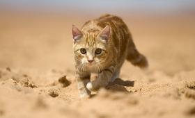 Kelebihan-Kelebihan Kucing